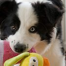 Play-time ? by Amy Collinson