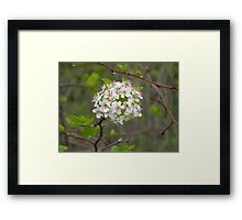 Bloom on the Tree Framed Print