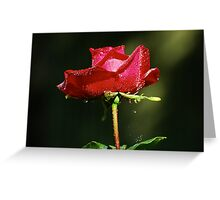 Wet single red rose with water droplets on dark green background Greeting Card