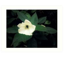 White flower 1  Art Print