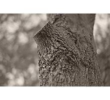 lop Photographic Print