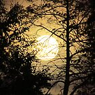 Moon Silhouette ~ by Brenda Dahl