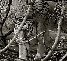 Hiding Hunter by kelleygirl