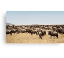 Wildebeest Migration, Maasai Mara, Kenya Canvas Print