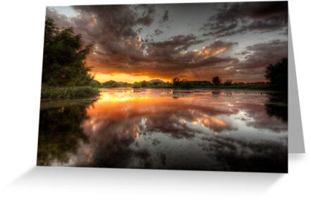 Swamp Glass by Bob Larson