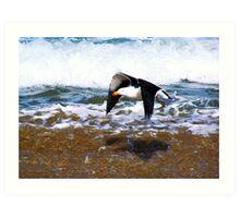 Pacific Gull Art Print