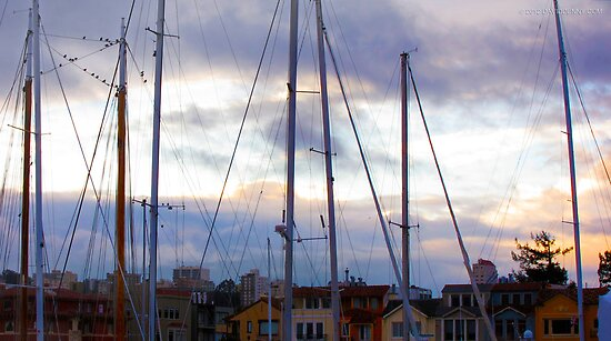 San Francisco Marina by David Denny