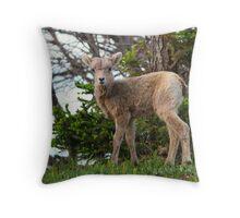 Baby Bighorn - Banff National Park Throw Pillow