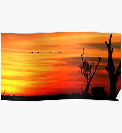 Kakadu Dreaming Poster