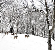 A winter scene - with Coyotes  by Poete100