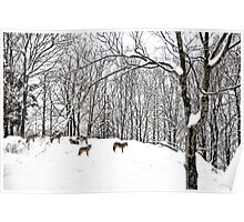 A winter scene - with Coyotes  Poster