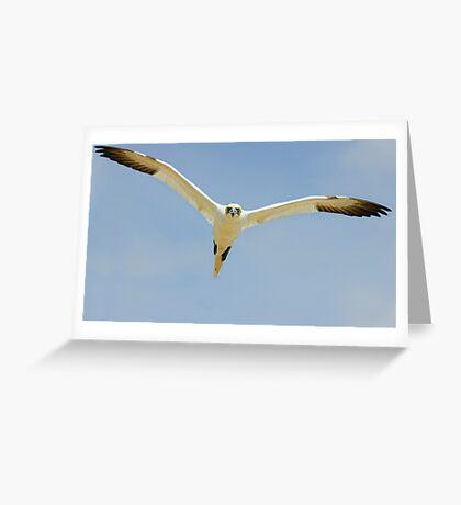that's MY landing space! Gannet, Saltee Island, County Wexford, Ireland Greeting Card