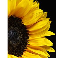 Sunflower on Black Background Photographic Print