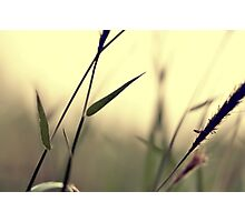 Dreams Of Nature Photographic Print