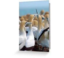 GANNET BEAUTY - CAPE GANNET - {Morus capensis}, Greeting Card