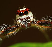 Jumper Posing by karthikphotos