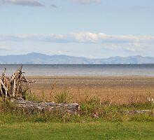 Miranda, New Zealand by Heather Thorsen