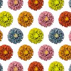 Funky Asters by Lisa Marie Robinson