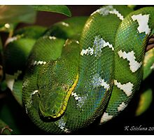 green boa 2 by bluetaipan