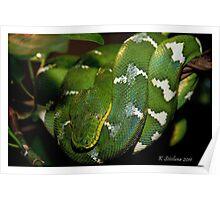 green boa 2 Poster