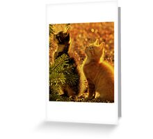 Kittens of gold Greeting Card