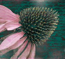 Vintage Daisy by Karen Lewis
