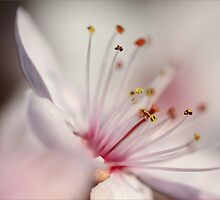 Addicted to Spring by janrique