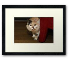 BUFFY THE BEAUTIFUL CAT Framed Print