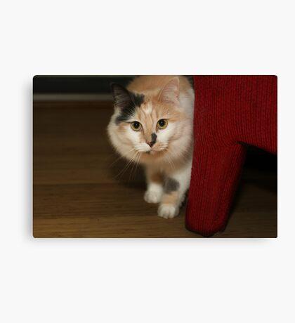 BUFFY THE BEAUTIFUL CAT Canvas Print