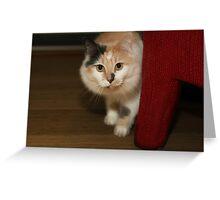 BUFFY THE BEAUTIFUL CAT Greeting Card
