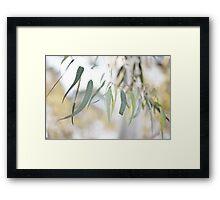 Gum Leaves Framed Print