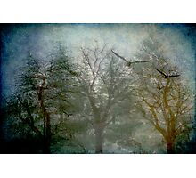 Songs from the Wood Photographic Print