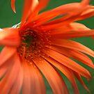 Orange Sunlight by randomness