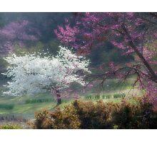 Dreamtime Photographic Print