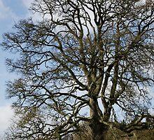 Killerton Estate ~ Broadclyst, Devon by Susie Peek