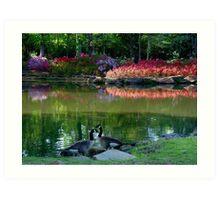 Azaleas And Geese Art Print