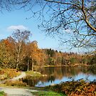 Path around Tarn Hows  by Irene  Burdell
