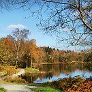 Path around Tarn Hows  by Irene  Burdell