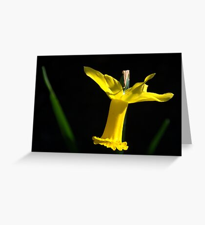 Jonquille . Greeting Card