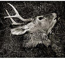 Deer Head Photographic Print