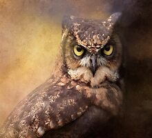 Bold Horned Owl by Norman Rawn