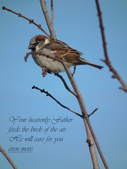 Your Heavenly Father Feeds the Birds by Deb Fedeler