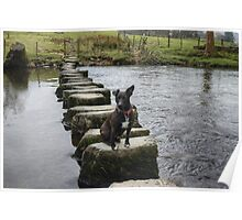 A Walk By Mere,Tarn and Water - The Terrier Poster