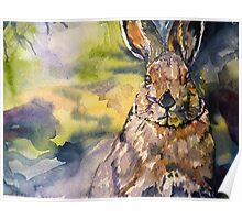 Springs Almost Hare Poster