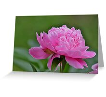 Perfectly pink peony Greeting Card