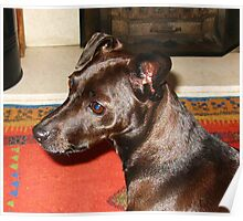 Portrait Of Lady Patterdale Of Waggintail Poster