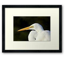 Egret Eye Framed Print