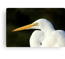 Egret Eye Canvas Print