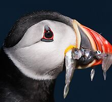 Puffin by Dean   Eades