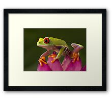 The young adventurer Framed Print